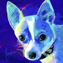 Breed:Chihuahua PrincessBlue