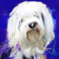 Dog Portraits, Tibetan Terrier