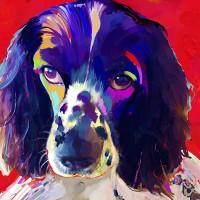Dog Portraits, Cocker Spaniel