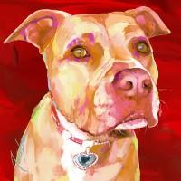 Dog Paintings - American Stafforshire - Pitbull