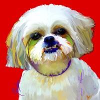 Dog Paintings, ShihTzu