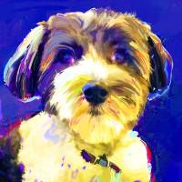 Dog Portraits, Coton de Tulear