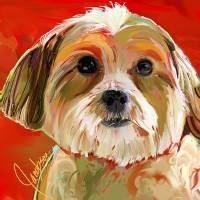 Dog Portraits, Morkie