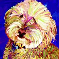 Dog Portraits, Golden Doodle