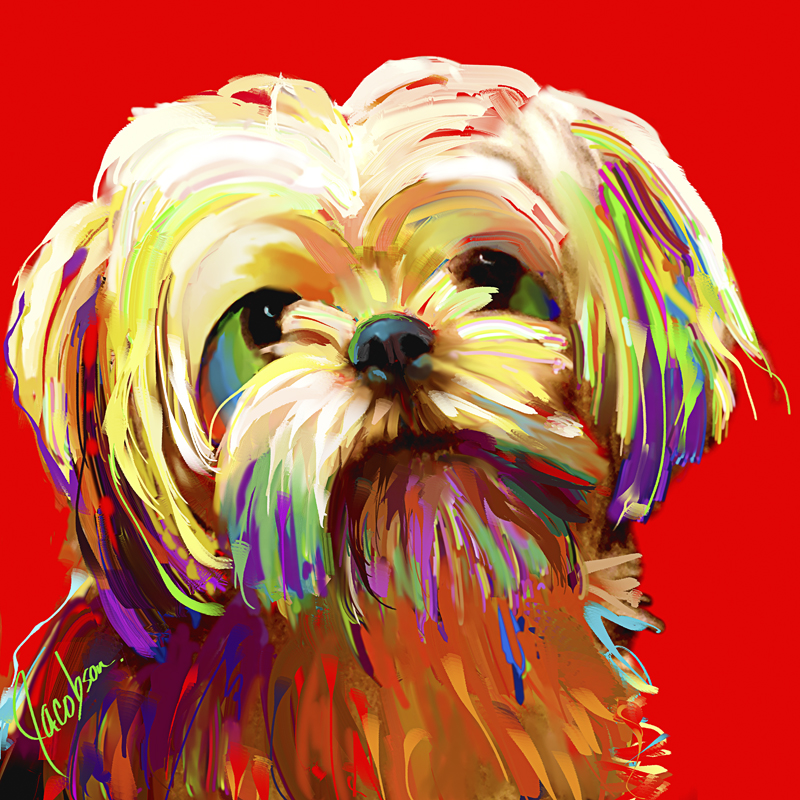 Dog Portraits, ShihTzu