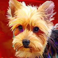 Dog Portraits , Yorkie