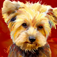 Dog Portraits, Yorkie