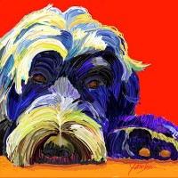 Dog Portraits, Portuguese water dog