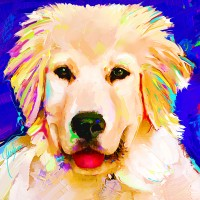 Dog Portraits, Golden Retriever