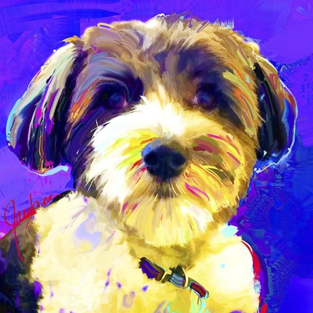 Coton de Tuléar - Dogs 101