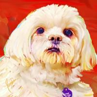 Dog Portraits, Peekapoo