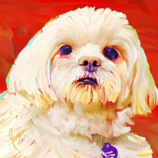 Dog Portraits, Peekapoo