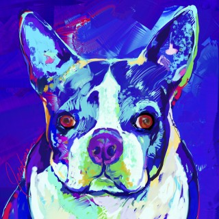 Dog Paintings - Boston Terrier