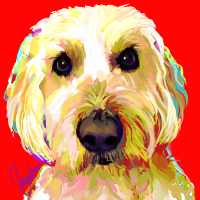 Dog Portraits - Golden Doodle