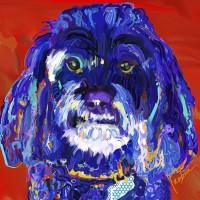 Dog Paintings - Cockapoo